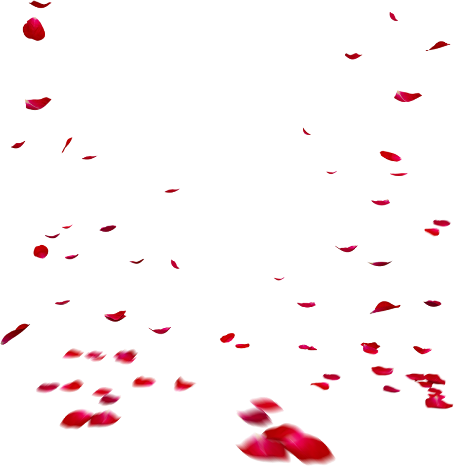 Transparent Red Rose Petals Falling, HD Png Download {#106357} - Dlf.pt