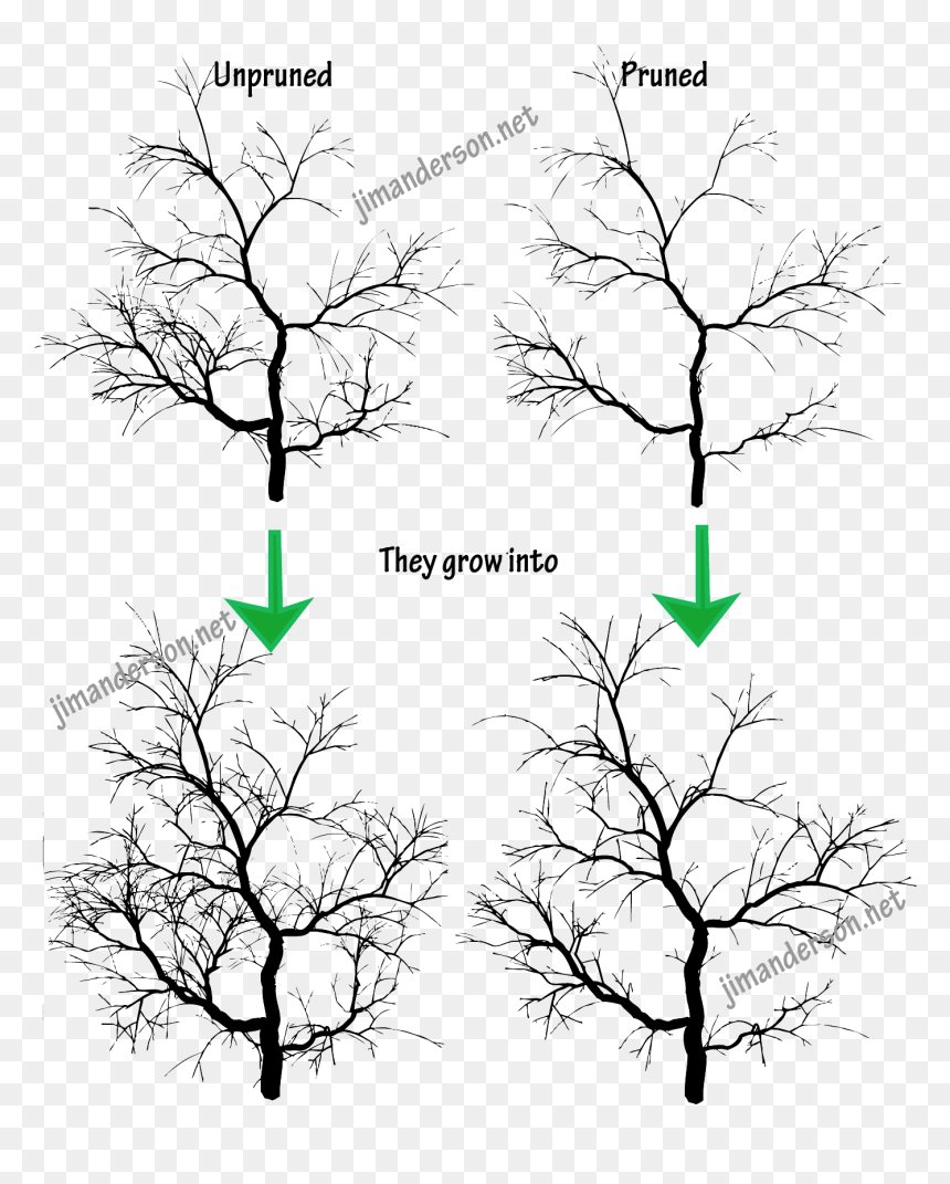 Japanese Maple Tree Drawings Hd Png Download 1401x1710 Png Dlf Pt