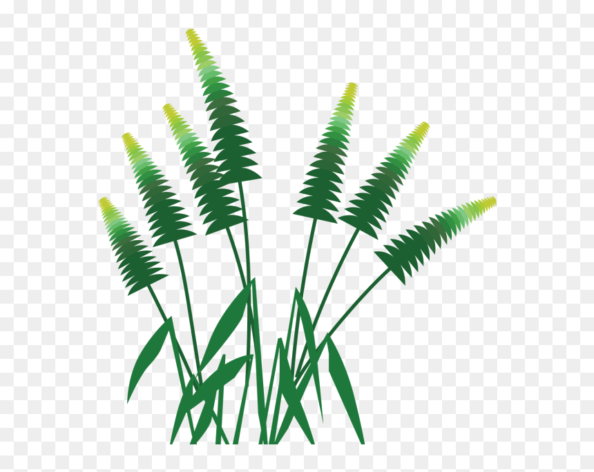Forest Palm Tree Grass, Forest, Palm, Tree Png And - กรอบ รูป ป่า ไม้ .png, Transparent Png