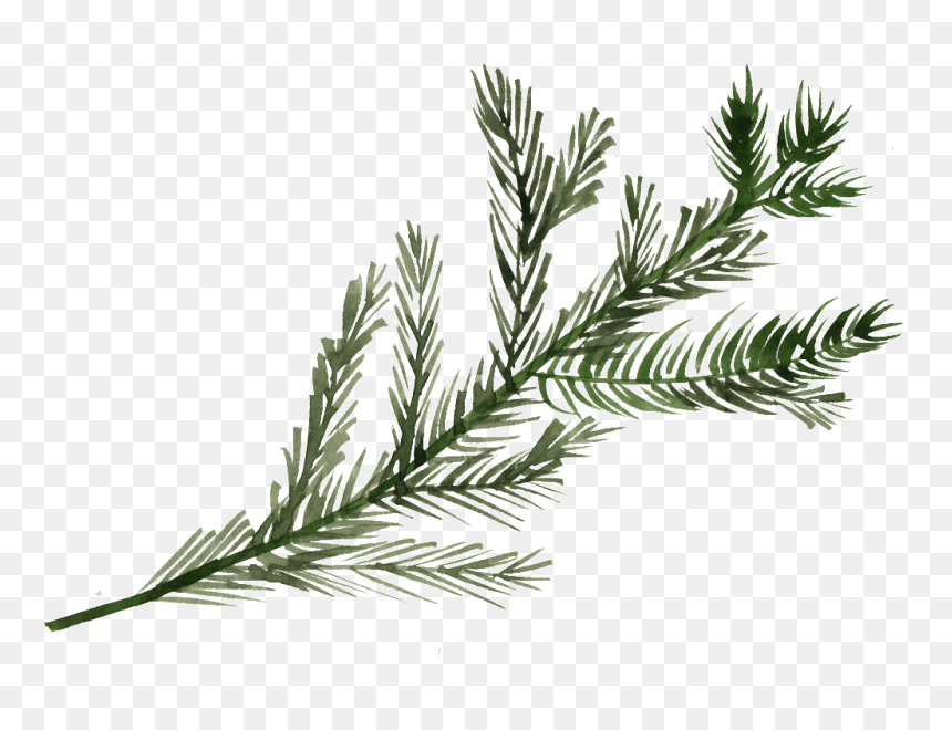 Pine Tree Branch Watercolor, HD Png Download