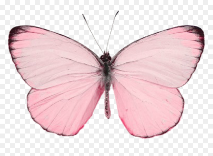 #butterfly #나비 #pink #borboleta #rosa #cute #aesthetic - Butterfly Png, Transparent Png