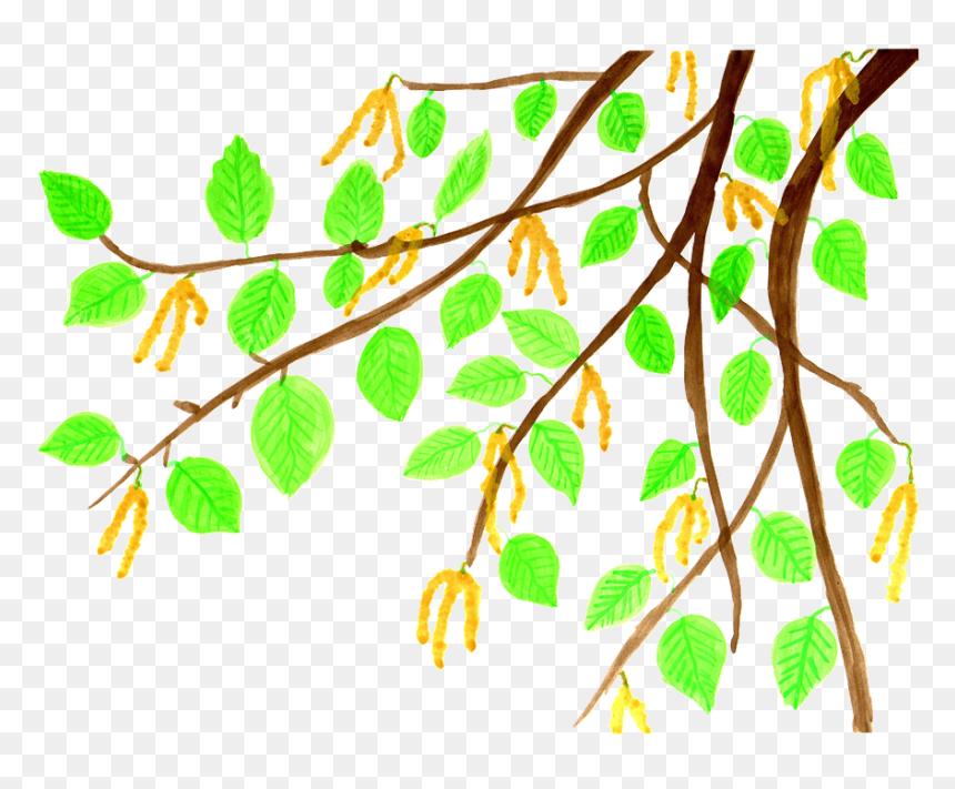 Branch Leaves Cliparts 20, Buy Clip Art - ธรรมชาติ การ์ตูน Png, Transparent Png