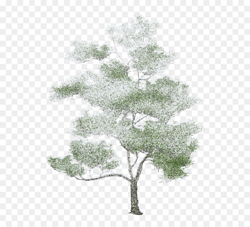 Tree Photoshop, Arbre Png, Drawing Trees, Watercolor - Watercolor Photoshop Trees Png, Transparent Png