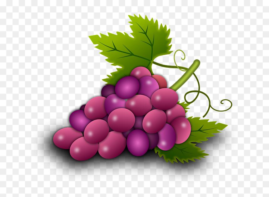 Illustration Grapes Vine Vineyard Wine - รูป องุ่น, HD Png Download