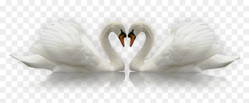 Transparent Swan Silhouette Png - Лебеди Пнг, Png Download