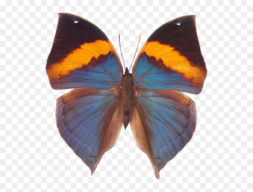 Free Download Of Butterfly Icon - Красивые Бабочки Пнг, HD Png Download
