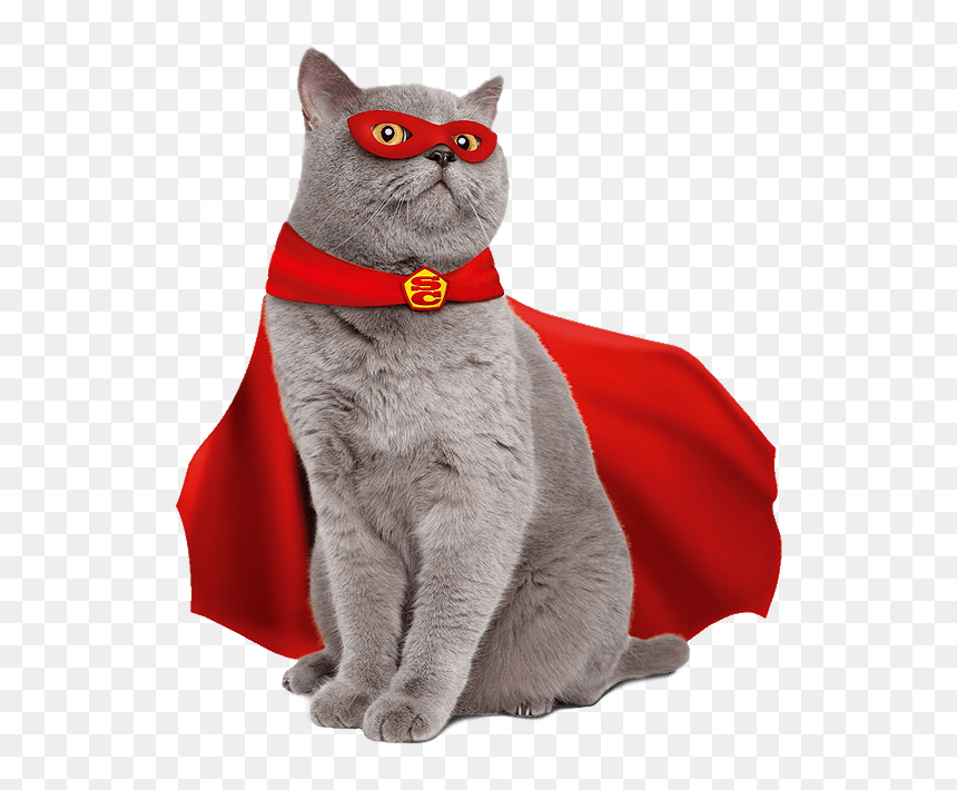 High Quality Super Cat Blank Meme Template - Supercat Cat ...