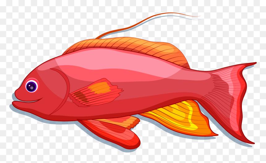 ikan kartun warna merah hd png download 1315x744 png dlf pt ikan kartun warna merah hd png