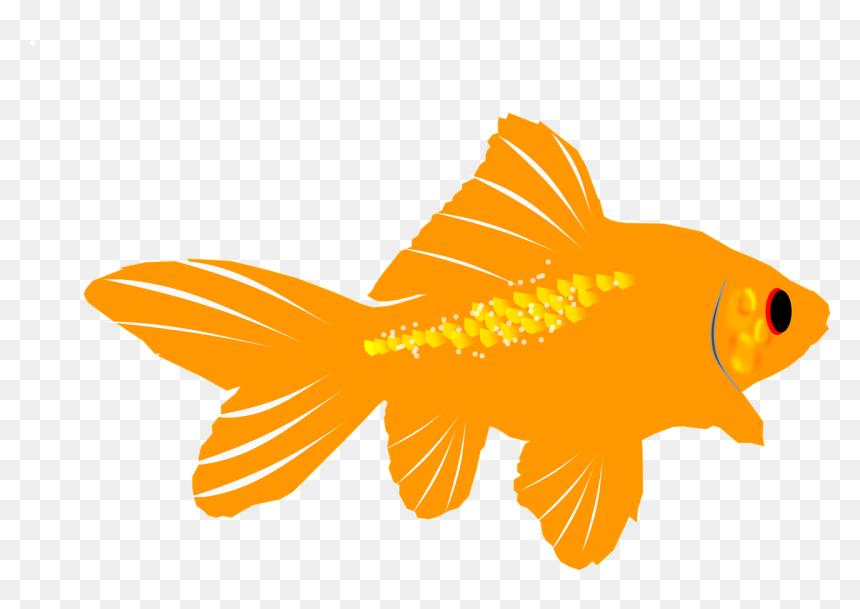Ikan Mas Gambar Ikan Hias Kartun, HD Png Download