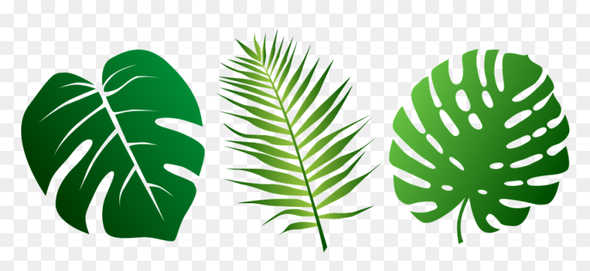 Tropical Leaves Svg Free Hd Png Download 960x480 Png Dlf Pt Silhouettes of evergreen compound leaves, different shapes, leaves made of thin curved lines. dlf pt