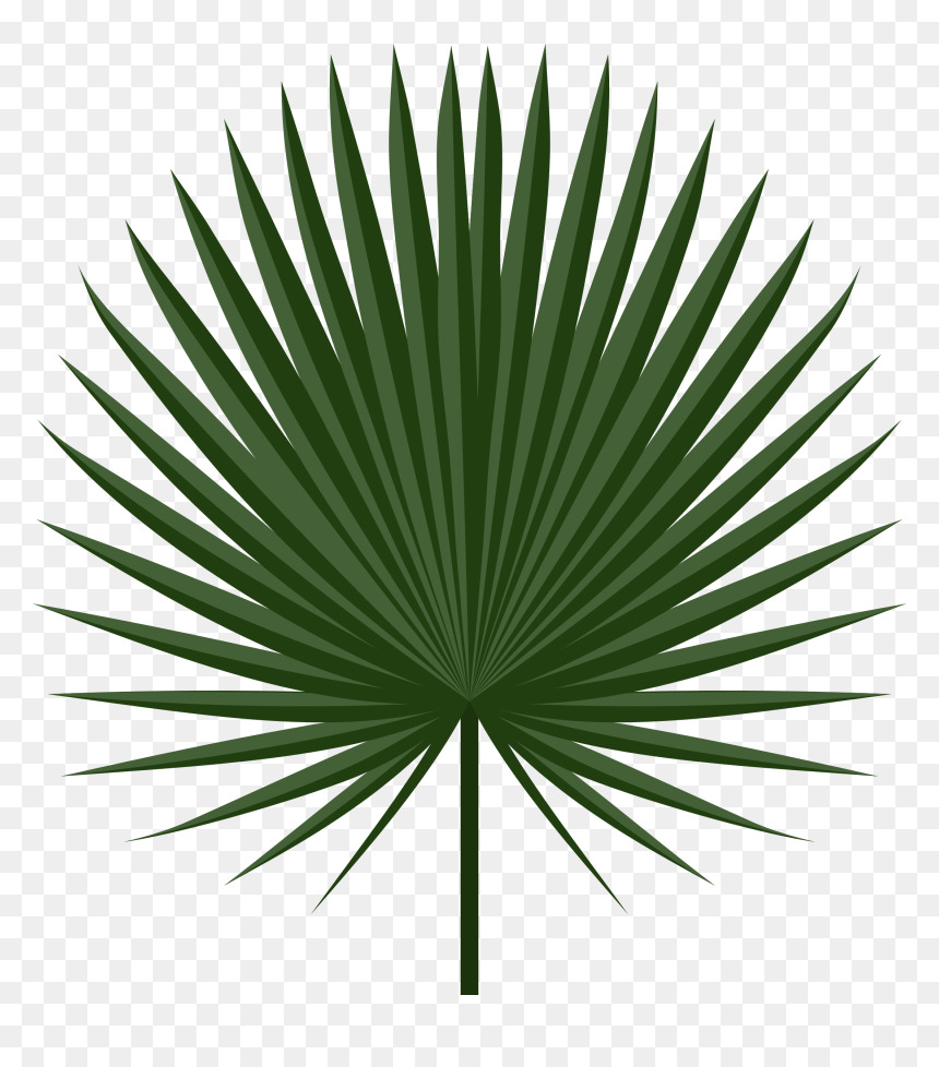 Clipart Leaves Palm Leaves Transparent Tropical Leaf Vector Hd Png Download 2200x2400 Png Dlf Pt Download transparent tropical leaves png for free on pngkey.com. clipart leaves palm leaves