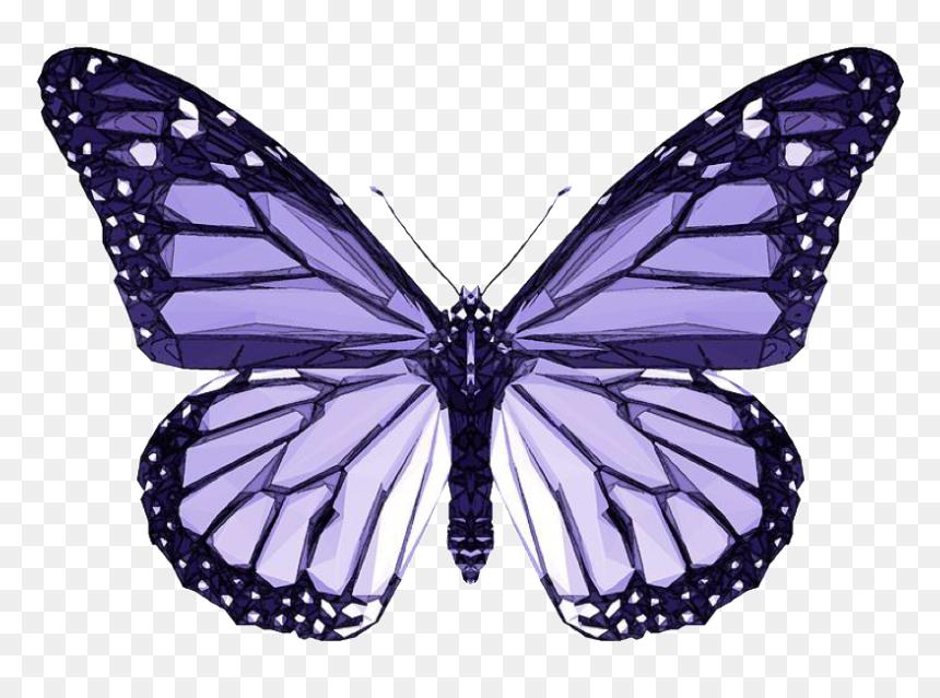 #purple #butterfly #aesthetic #purpleaesthetic #vsco ...
