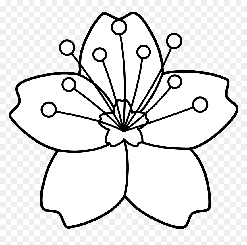 Cherry Blossom Line Art - Cherry Blossom To Colour, HD Png Download