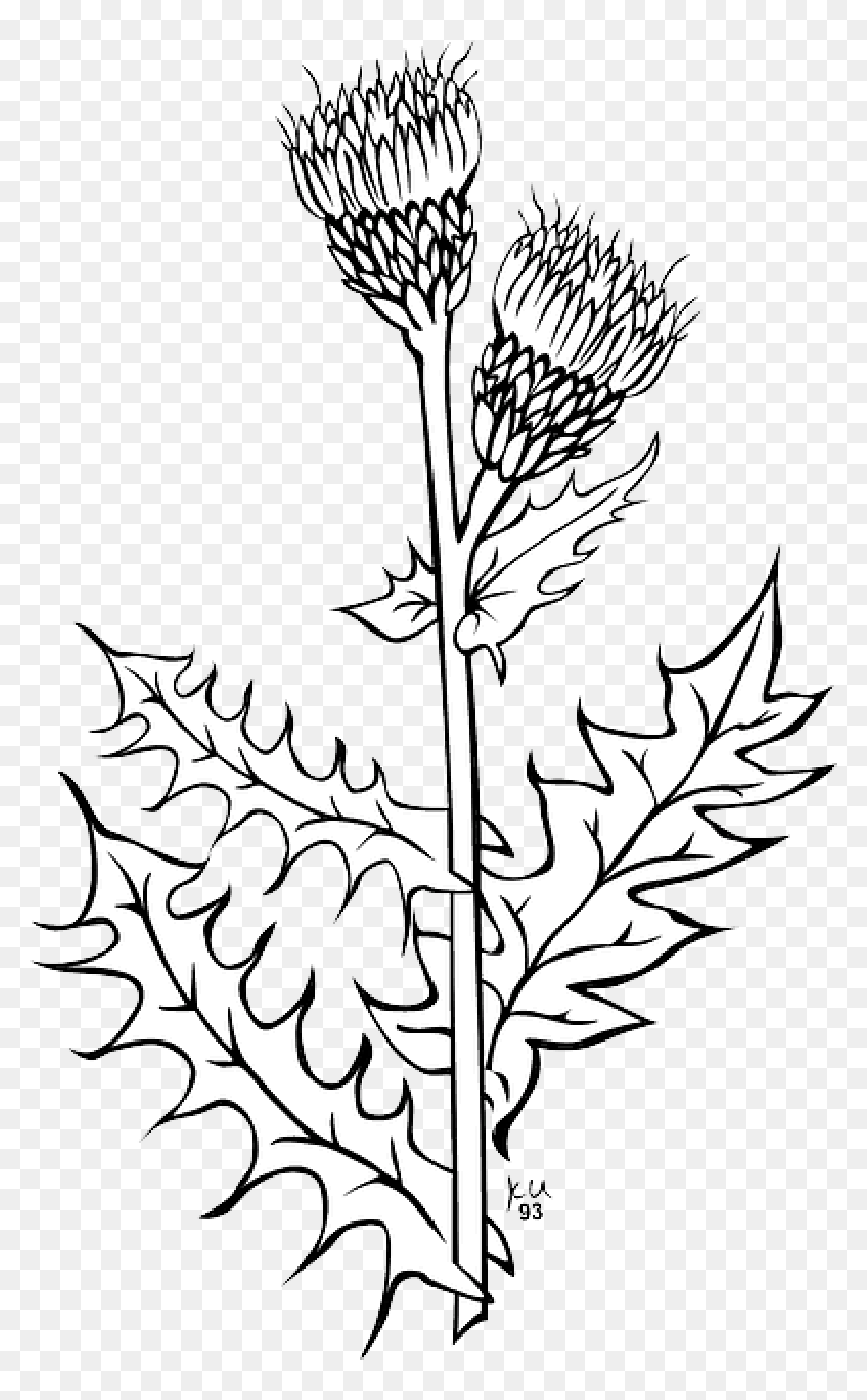 Outline, Plants, Flowers, Flower, Plant - Black And White Weeds Clipart, HD Png Download