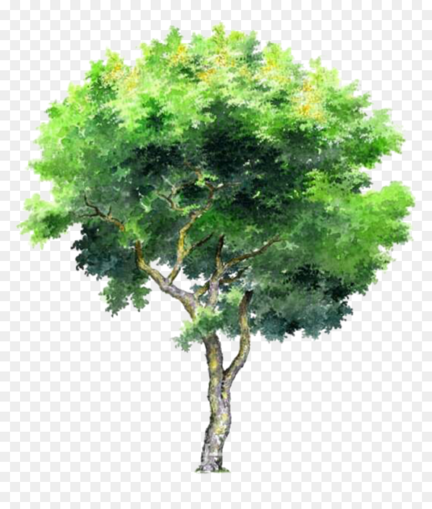 Tree Trees Leafs Greentree Green Ftestickers - Architecture Tree 3d Png, Transparent Png