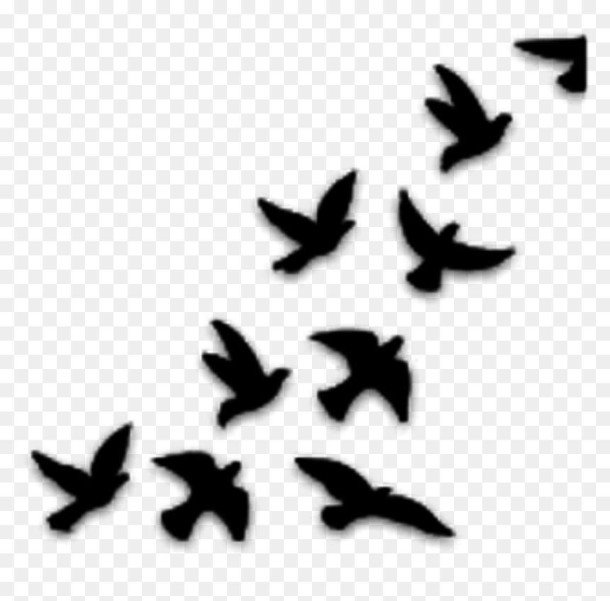 Dibujos De Pajaros Volando, HD Png Download