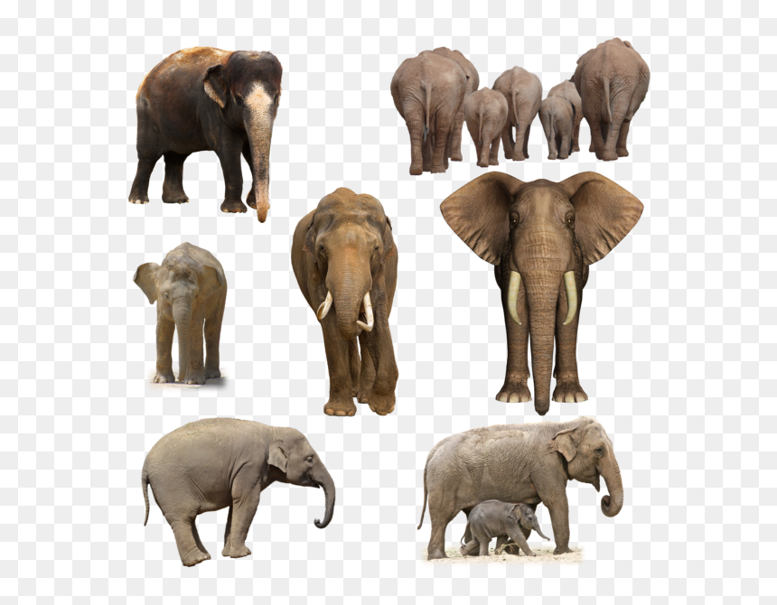 Elephant Png Pic Wild Elephant Hd Png Transparent Png 600x600 Png Dlf Pt Almost files can be used for commercial. dlf pt