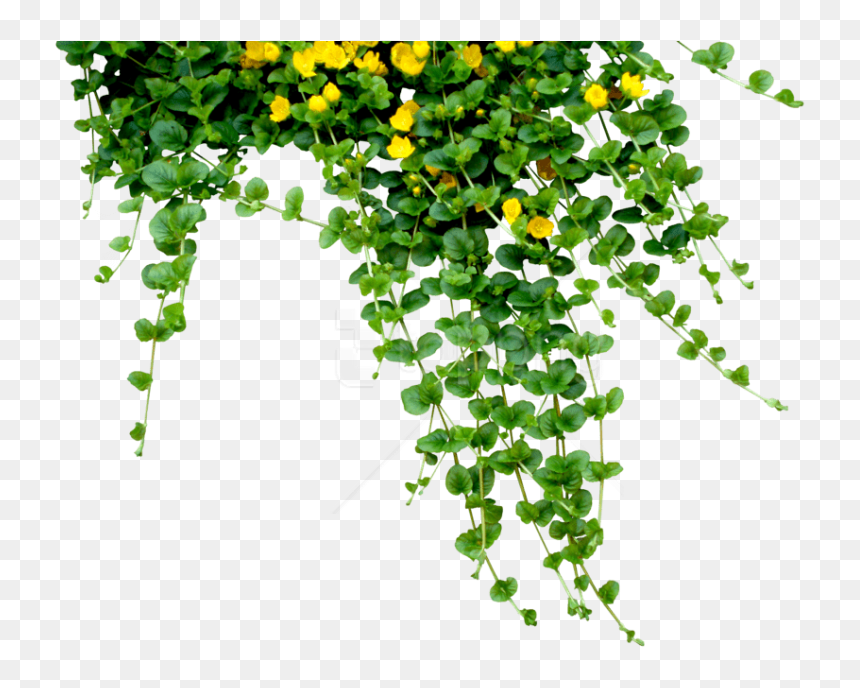 Free Png Download Plants Png Images Background Png - Plants And Flowers Png, Transparent Png
