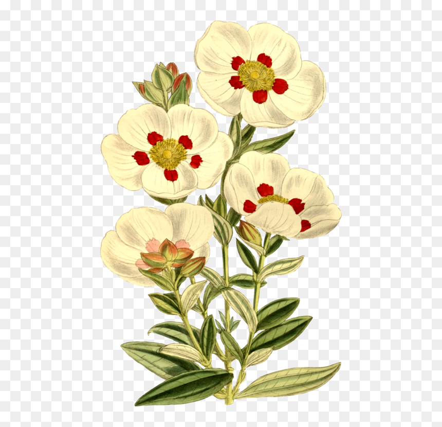 Plant,flower,cut Flowers - Easy Flower Embroidery Designs, HD Png Download