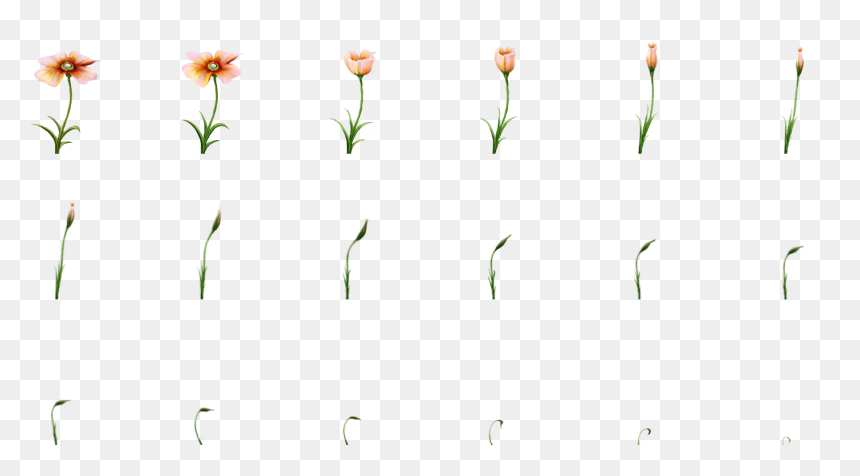Plant, HD Png Download
