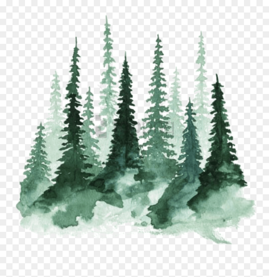 Watercolor Pine Trees Png, Transparent Png