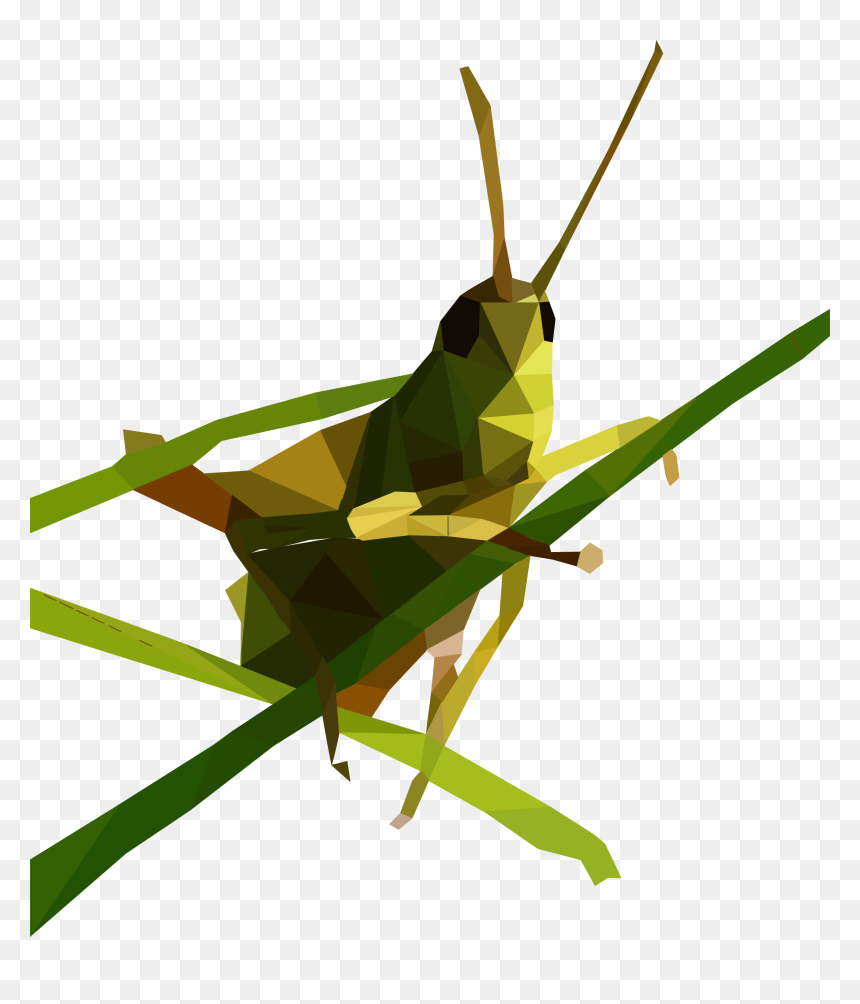 Grasshopper Low Poly, HD Png Download