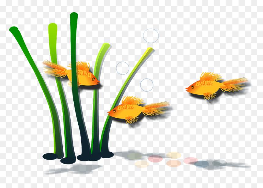 ภาพ วาด พืช น้ำ, HD Png Download