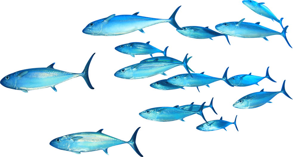 Fish School Png Transparent Png Png Collections At Dlf Pt
