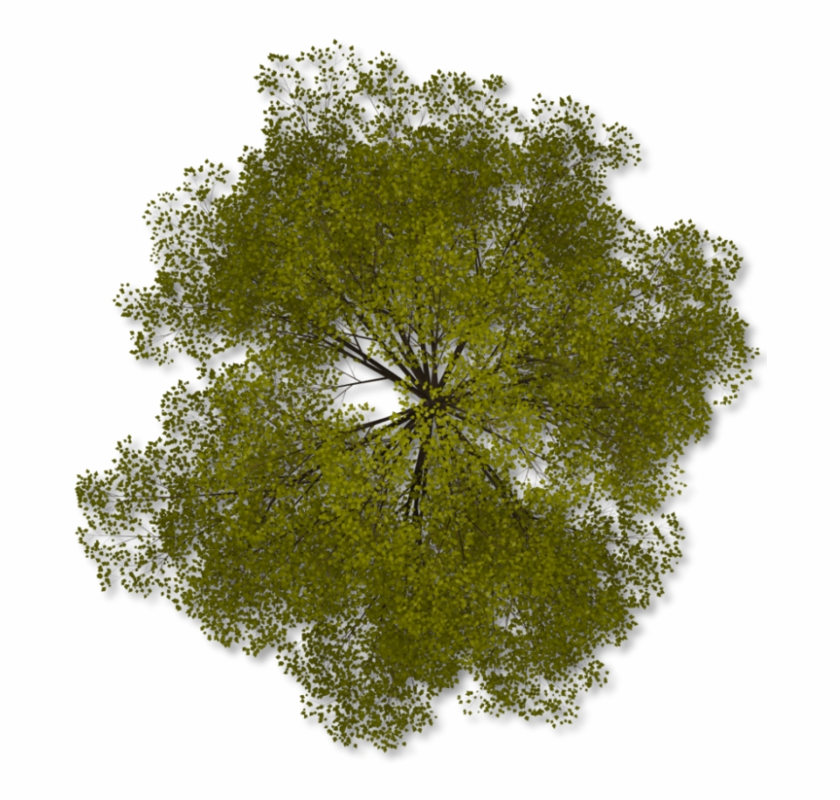 aerial tree png aerial trees png, transparent png, png collections at dlf.pt