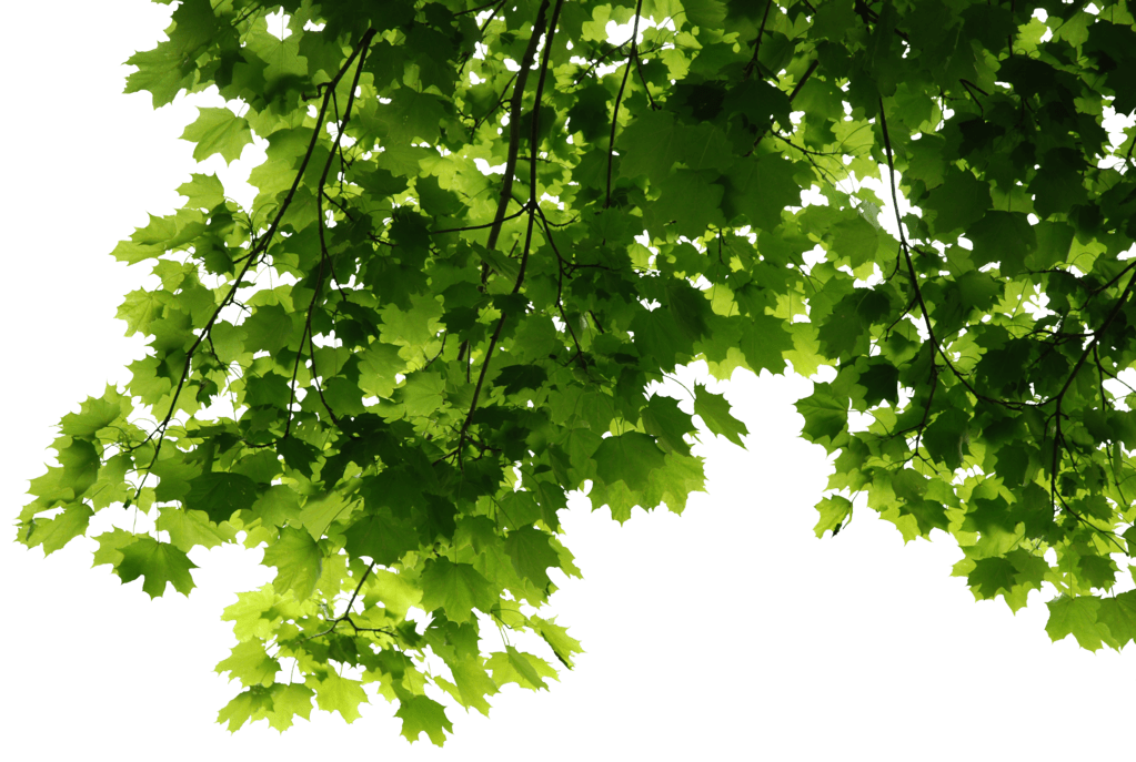 Leaves Png Images, Transparent PNG, png collections at dlf.pt
