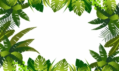 Jungle Leaf Transparent Png Png At Dlf Pt It is a big collection of png banner, png decorative elements and much more. jungle leaf transparent png png at dlf pt